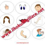 Body Parts Cup Game