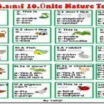3.Sınıf 10.Ünite Nature Test